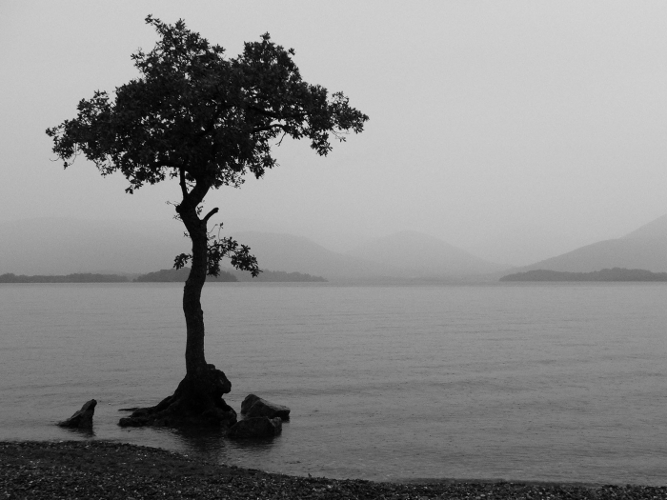 Lonely-Tree-Lake-667x500 (4x3)